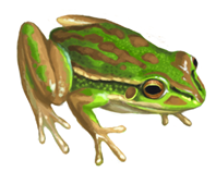 Green & Golden Bell Frog eDNA test