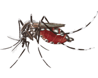 Asian Tiger Mosquito eDNA test